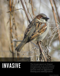 Invasive versus Threatened