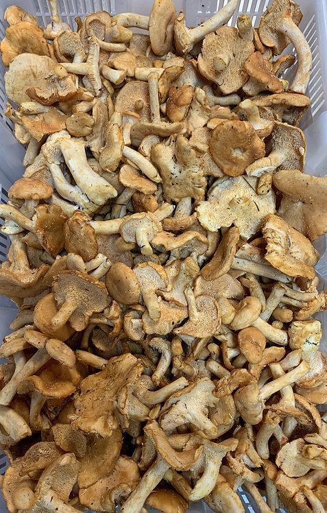 Hedgehog Mushrooms, 4 oz.