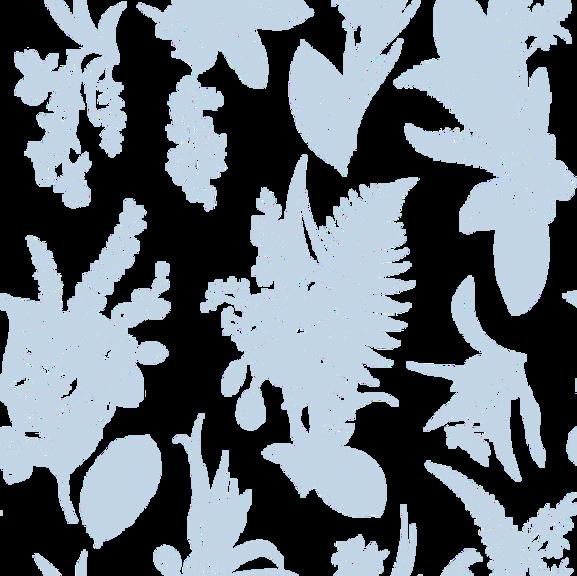 Botanical%252520Illustration_edited_edit