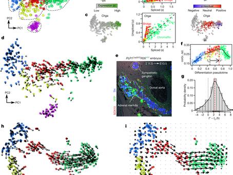 Transcription dynamics using RNA-seq