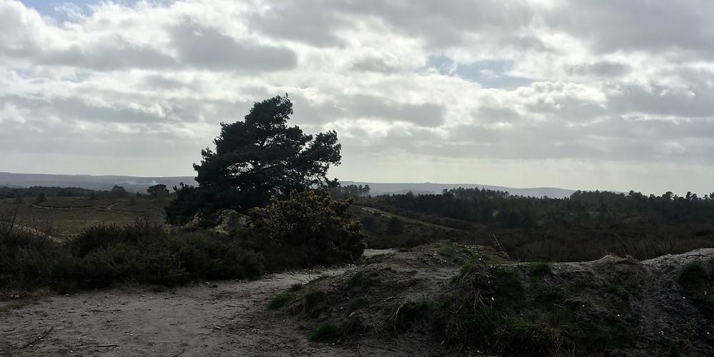 Wareham-forest
