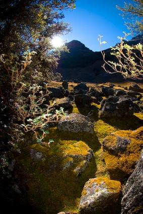 Mystical Forest via Mantanay.jpg