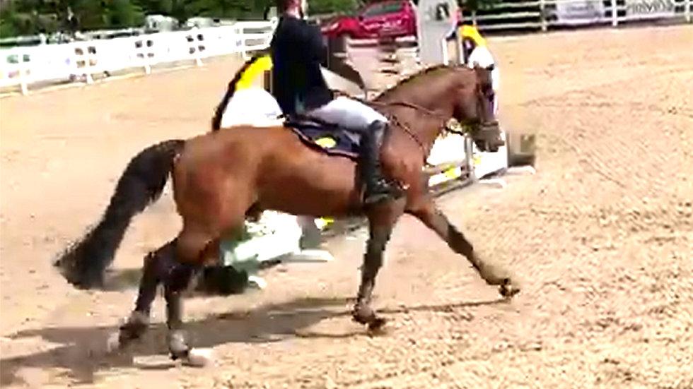 Немецкий жеребец
