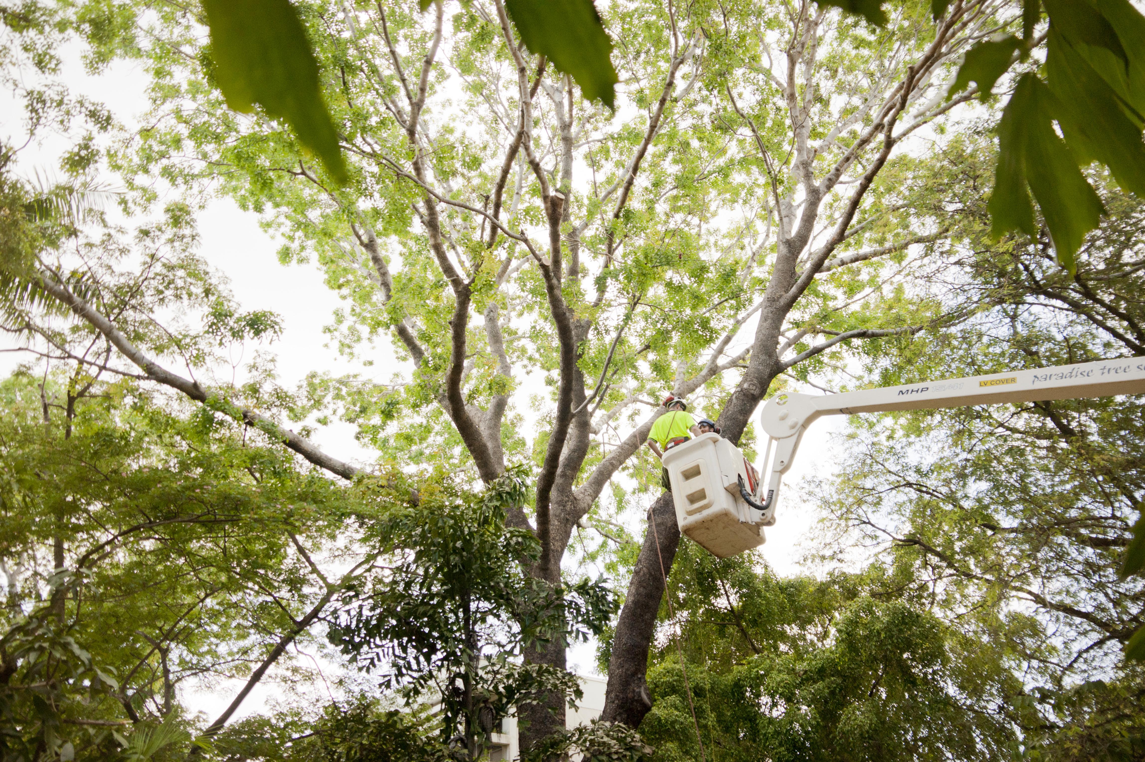 trees (5)