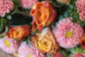 circus rose.jpg