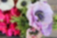purple anem.jpg