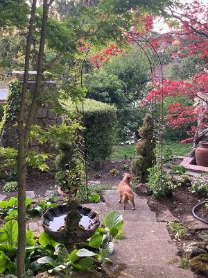 Pat Talbert - Garden.jpeg