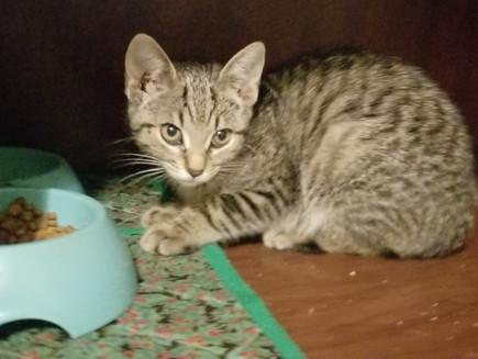 Kitten Fever