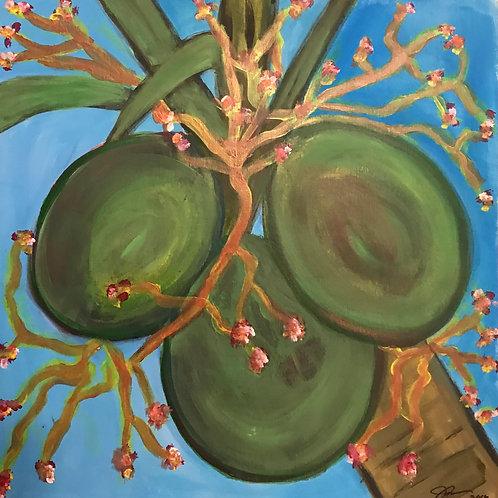 Puertorican Coconuts SOLD