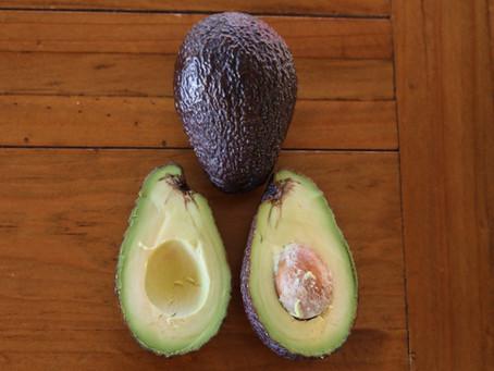 Pflanze des Monats Februar 2020 - Avocado