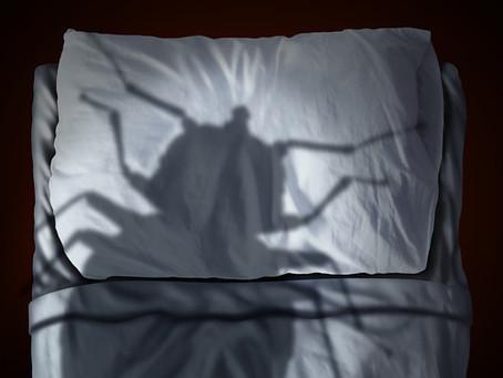 Punaises de lit : prévenez l'invasion grâce à un dispositif efficace et durable !
