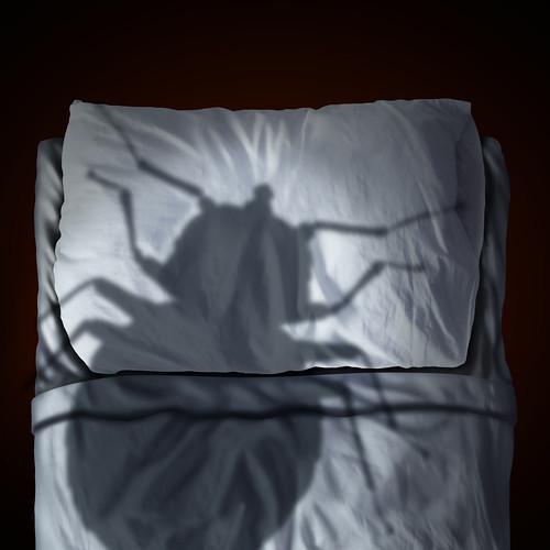 Dispositif punaise de lit