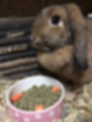 rabbit boarding colchester, rabbit boarding essex, cattery colchester, dog kennels, hilltop kennels, catteries colchester