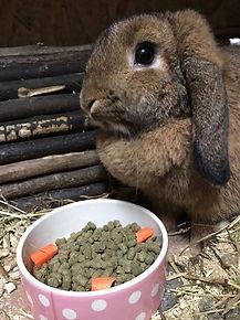 rabbit boarding colchester, rabbit boarding essex, cattery colchester, dog kennels, hilltop kennels, catteries colchester