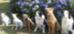 boarding kennels colchester, cattery colchester, dog kennels, boarding kennels clacton, boarding kennels brightlingsea, catteries colchester