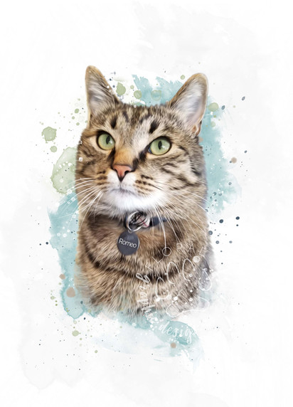 Andra Secara I Custom Pet Portrait I Kitty Cat.jpg