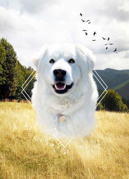 Samantha Henry I Custom Pet Portrait _ Bear.jpg