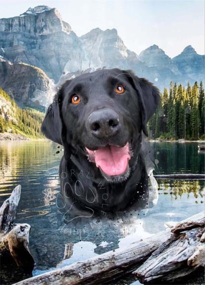 Tasha Kovak I Custom Digital Pet Portrait I Lincoln copy.jpg