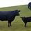Thumbnail: Calf Rearing