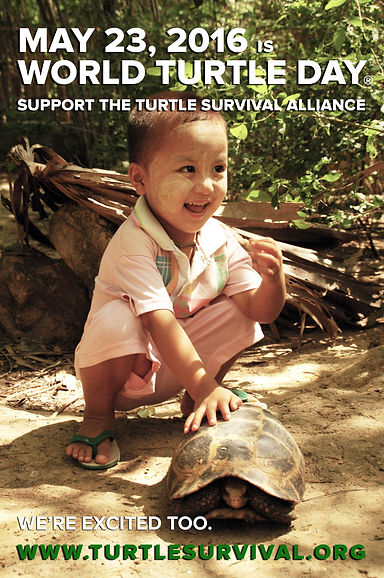 World Turtle Day Social Media Post