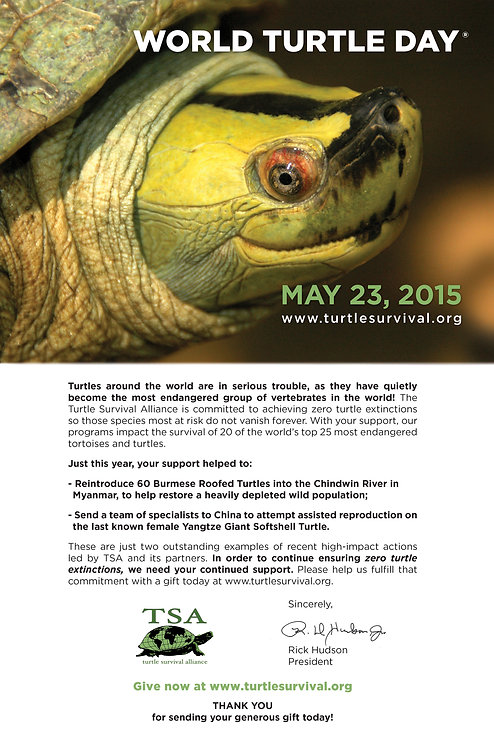 World Turtle Day Email Fundraiser Letter