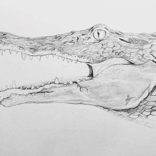 Ol' Gator