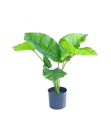 צמחים מלאכותיים קטנים צמח טארו צמחים מלאוכתיים איכותיים לרכישה אונליין