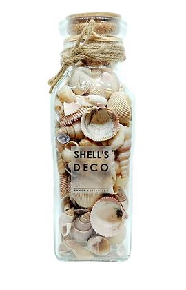 בקבוק צדפים בצבע טבעי , בקבוק צדפים טבעיות, בקבוק צדפים דקו, אביזרי נוי, אקססוריז לבית,