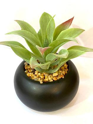 צמחים קטנים עציץ קטן קקטוסים מלאכותיים כלי עגול שחור אונליין