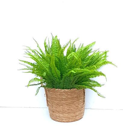 מארז סל קש עם שרכים צמחים בכלים מעוצבים לרכישה אונליין