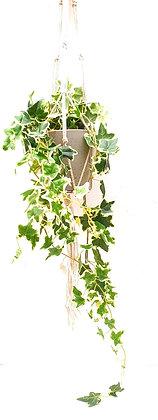 קיסוס נשפך צמח נופל מלאכותי לרכישה אונליין