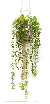 צמח נשפך צמח מלאכותי נשפך ענף אקליפטוס נשפך