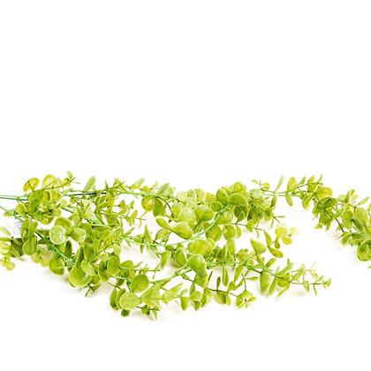 צמח נשפף
