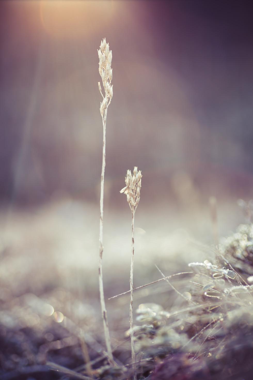 Hanna Rydström Photography. Foto kunst, Natur, Makro, Vegg kunst, Photo art, Nature, Macro, bilder til vegg, väggkonst, wall art,