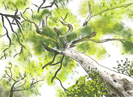 Safari de Feng Shui por Palma