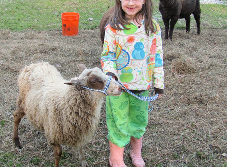 A few small changes gives your flock cleaner fleeces