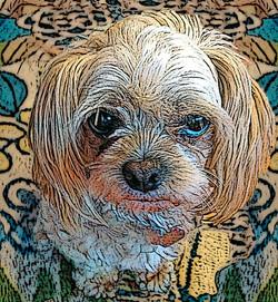 Bad Doggie III
