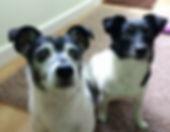 Doggies feel better after massage