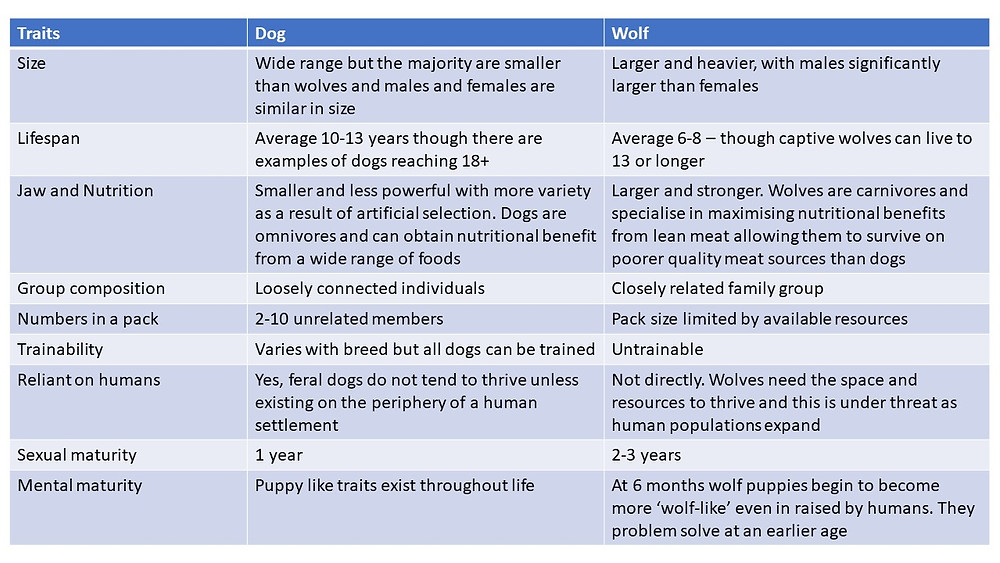 A summary of the differences between dogs and wolves