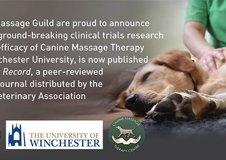 It's official - Dogs have less pain after Clinical Massage treatment!