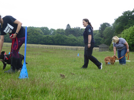 Dog Training - with a difference