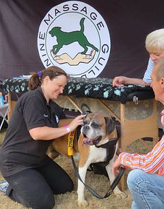 Free Canine Muscular Health Check at local dog show