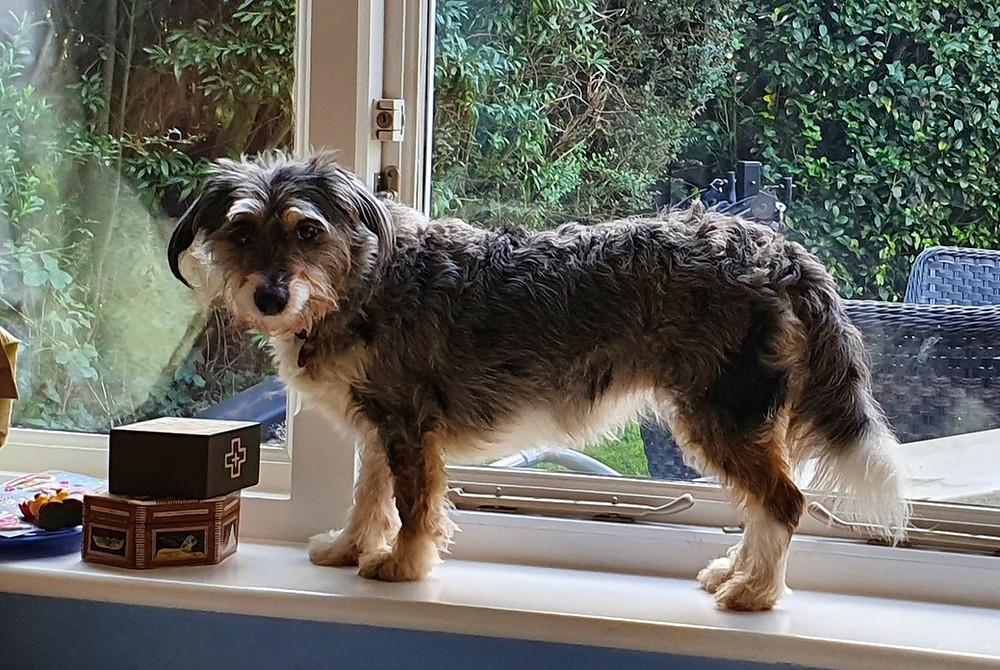 Dog on windowsill