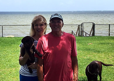 Bayside labradors family
