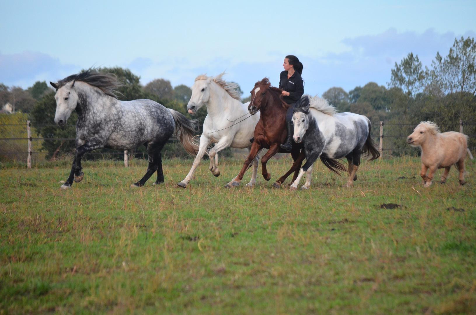 Anne-Gaëlle en liberté avec ses chevaux