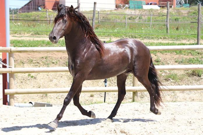 Bolero_cheval_pre_vente.jpg