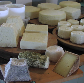 Introduction to Cheesemaking