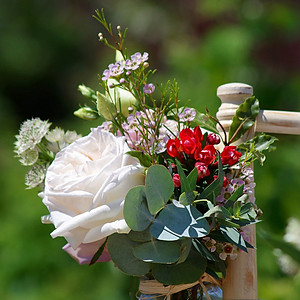 Anemone Blue Florist