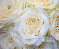 White Wedding Roses