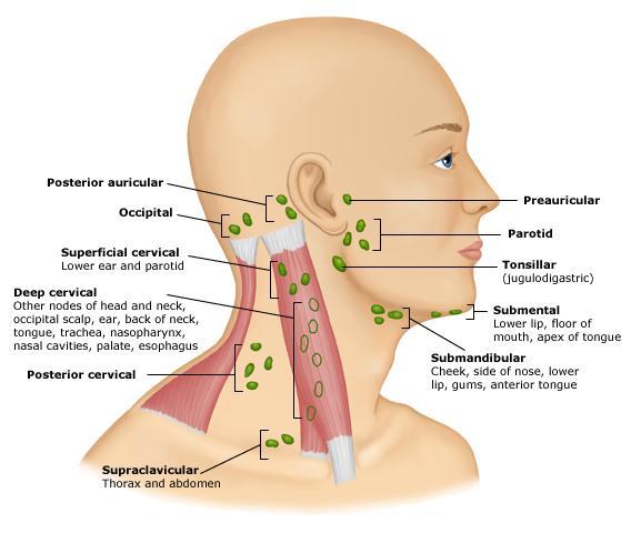 lymph_nodes_head_and_neck